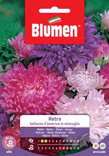 Immagine di Semi di Astro bellezza america color mix Blumen fiori grandi aiuole vaso pianta