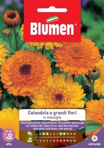 Immagine di Confezione semi Calendula grandi fiori in mix Blumen fiori aiuole vaso pianta