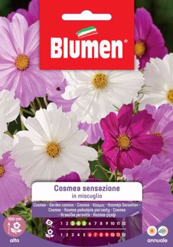 Picture of Confezione semi Cosmea sensazione in mix Blumen fiore alto aiuole bordure pianta
