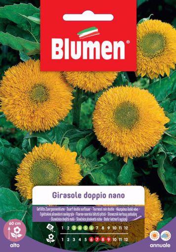 Picture of Confezione semi girasole doppio nano giallo Blumen pianta per giardino e vaso