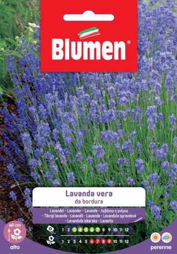 Picture of Confezione semi Lavanda Vera da bordura Blumen pianta giardino roccioso vialetto
