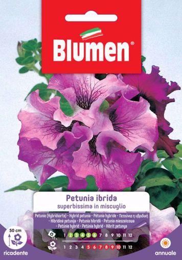 Picture of Confezione semi Petunia superbissima in mix Blumen aiuole balconi terrazzi vaso
