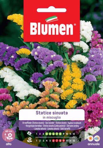 Picture of Confezione Statice sinuata in mix Blumen aiuole giardino bordure vaso decorativa