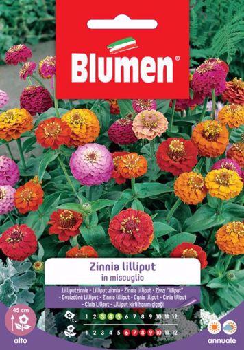Picture of Confezione semi Zinnia Lilliput in mix Blumen aiuole giardino bordure vaso