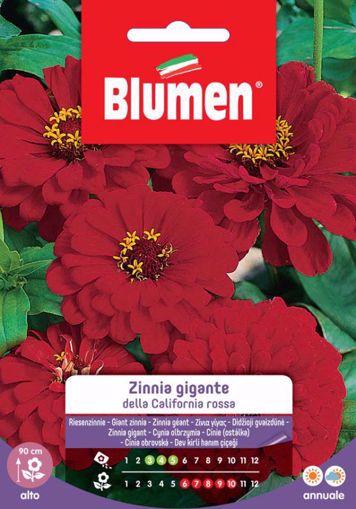 Immagine di Confezione semi Zinnia gigante California Blumen aiuole giardino bordure vaso