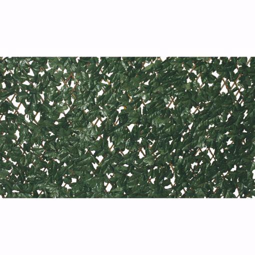 Picture of Siepe Panelgreen Alloro