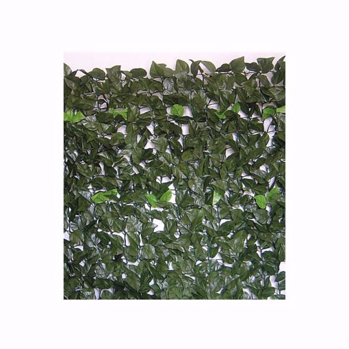 Immagine di Siepe evergreen Lauro 1,5 x 3 mt